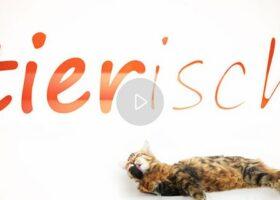 TV Sendung Tierisch bei Dr. Felix Bertram